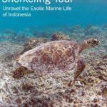 Lombok Snorkeling Tour
