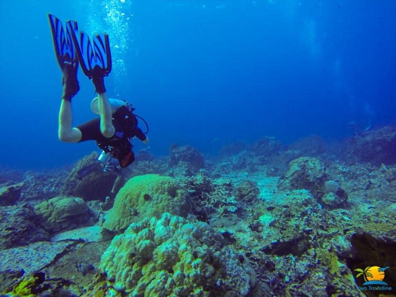 Sailing Komodo: Water Sport