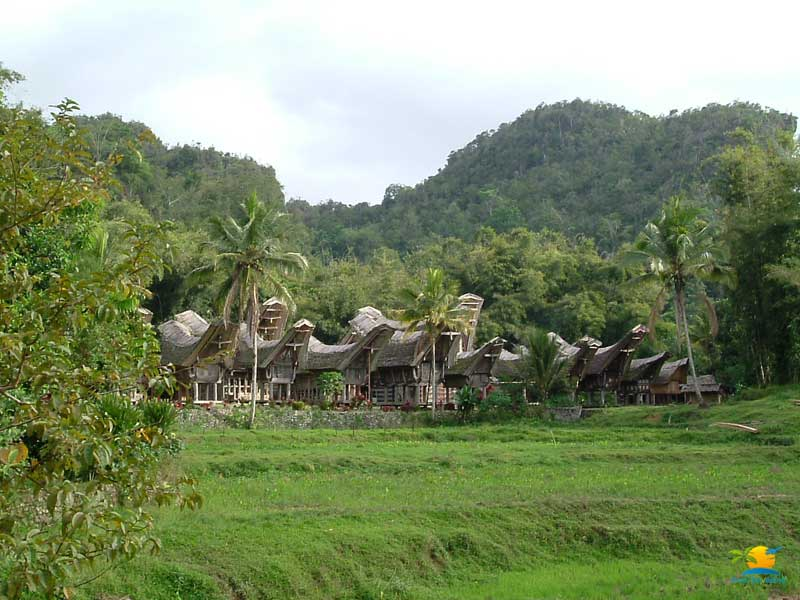 Toraja Tour Package: Silanan Traditional village